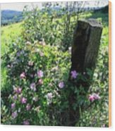 Barbed Wire And Roses Wood Print