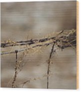 Barbed Wire Entwined With Dried Vine In Autumn Wood Print