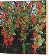 Barberries Wood Print