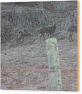 Barbwire And Whitetails Wood Print