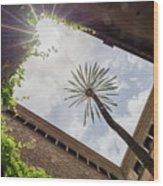 Barcelona Courtyard With Palm Tree Wood Print