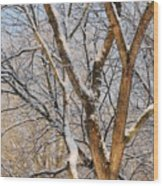 Bare Branches Wood Print