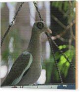 Bare Eyed Pigeon Wood Print