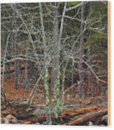 Bare Tree And Boulders In Mark Twain Forest Wood Print