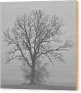 Bare Tree In Fog Wood Print