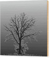 Bare Tree In Fog- Pe Filter Wood Print