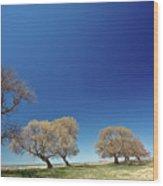 Bare Trees Along Shore Of Lake Manitoba Wood Print