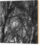 Bare Trees II Wood Print