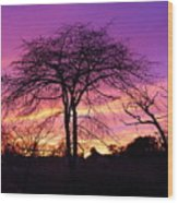 Bare Trees In Gorgeous Sunset Wood Print