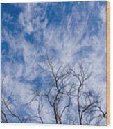 Bare Winter Branches In California Wood Print