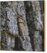 Bark At The Park Wood Print