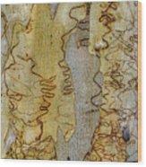 Bark Kc03 Wood Print