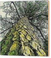 Bark Up The Tall Pine Tree Abstract In Felicina  Louisiana Wood Print
