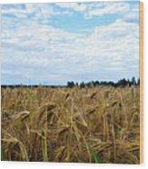 Barley And Sky In Oulu, Finland. Wood Print