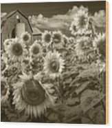 Barn And Sunflowers In Sepia Tone Wood Print