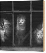 Barn Cats Wood Print