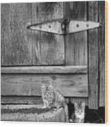 Barn Cats Wood Print