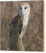 Barn Owl 2 Wood Print