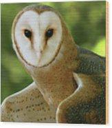 Barn Owl-6553 Wood Print