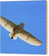 Barn Owl Flight Wood Print