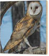 Barn Owl Framed In Cottonwood Wood Print