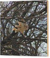 Barn Owl In A Tree Wood Print