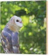 Barn Owl Looking Skyward Wood Print