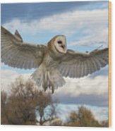 Barn Owl Makes A Happy Landing Wood Print