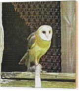 Barn Owl On The Prowl Wood Print
