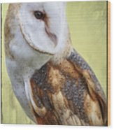 Barn Owl Portrait Wood Print