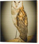 Barn Owl Wood Print