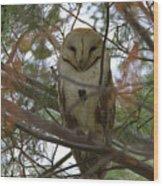 Barn Owl Sleeping Wood Print