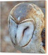 Barn Owle 1 Wood Print