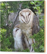 Barn Owls Wood Print