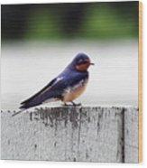 Barn Swallow At Fort Larned Wood Print