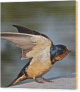 Barn Swallow Wood Print by Byron Varvarigos
