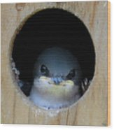Barn Swallow Chick Wood Print by DigiArt Diaries by Vicky B Fuller