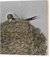 Barn Swallow Hirundo Rustica Wood Print by Douglas Barnett