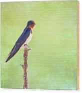Barn Swallow, Hirundo Rustica Wood Print