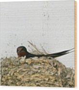 Barn Swallow Nesting Wood Print