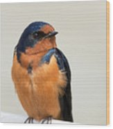 Barn Swallow Perched On A Fence Wood Print