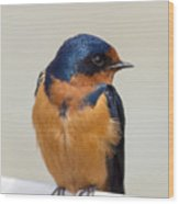 Barn Swallow Perched On A Fence Watching Wood Print