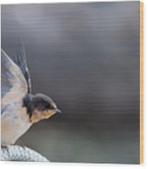 Barn Swallow Stretch Wood Print