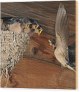 Barn Swallows At Nest Wood Print by Scott  Linstead