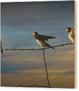 Barn Swallows On Barbwire Fence Wood Print