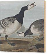 Barnacle Goose Wood Print