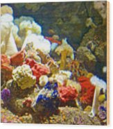 Barnacles And Sea Urchin Among Invertebrates In Monterey Aquarium-california  Wood Print