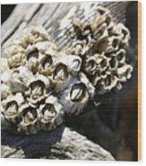Barnicles And Wood Wood Print