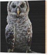 Barred Owl Baby -4 Wood Print