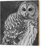 Barred Owl Beauty Wood Print